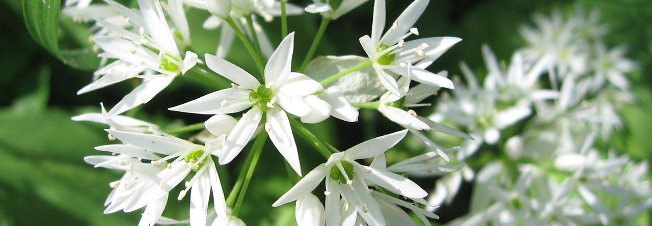 Reflexibel Åsa Jalloh - vita blommor
